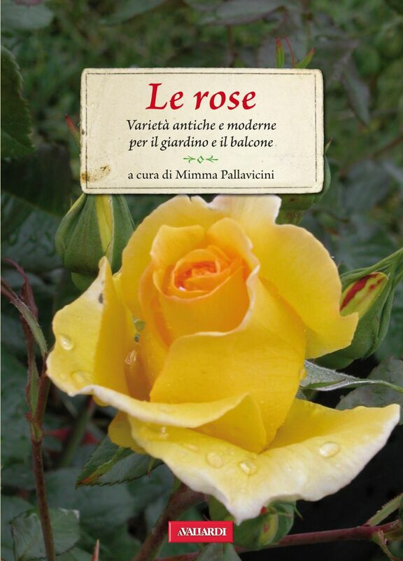 Le rose Varietà antiche e moderne per il giardino e il balcone