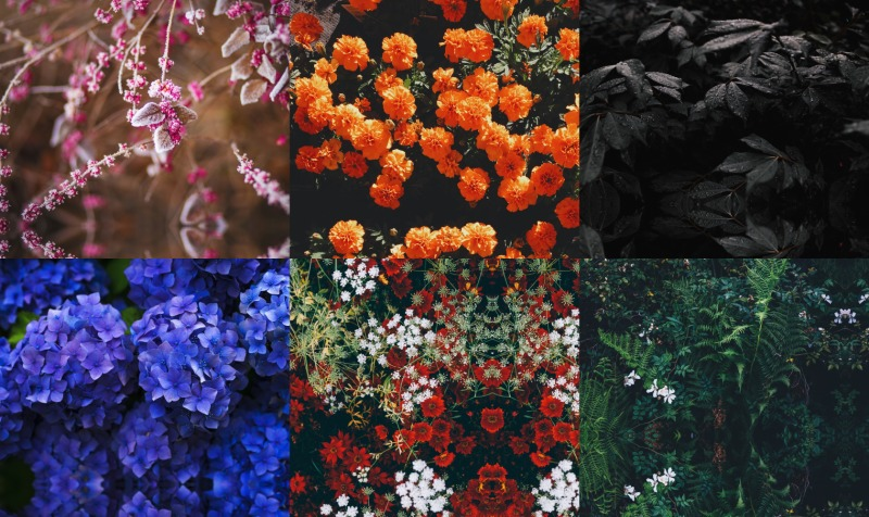 Flowers preview