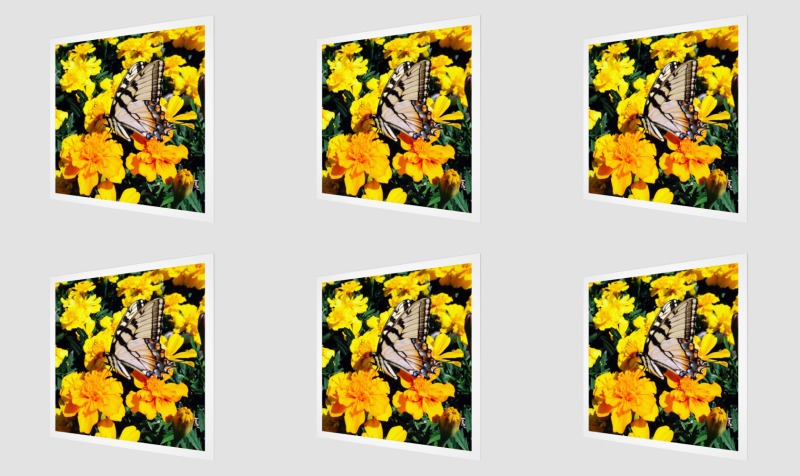 Butterfly in the Marigolds preview