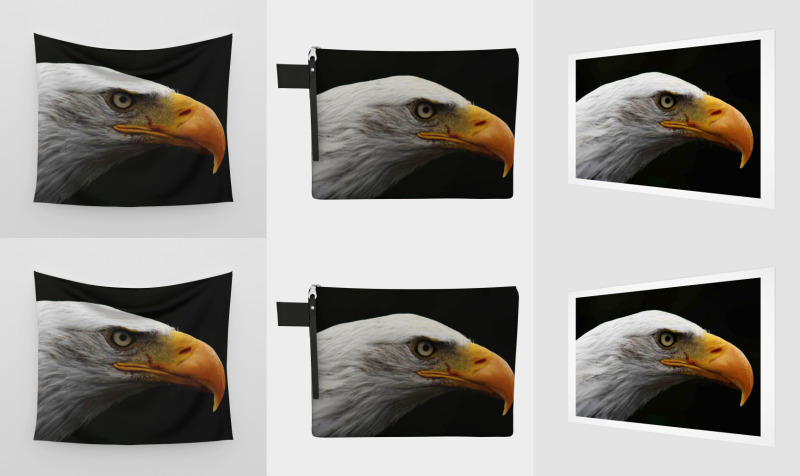 Bald Eagle preview