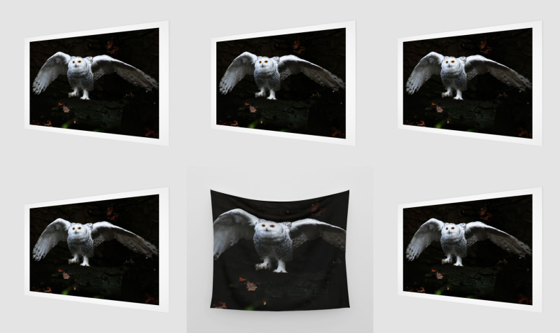 Snowy Owl With Open Wings preview
