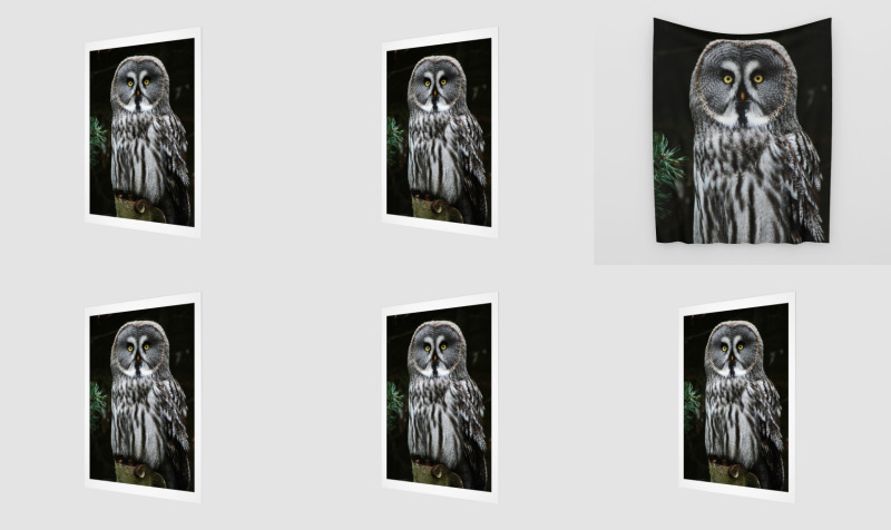 The Great Grey Owl preview