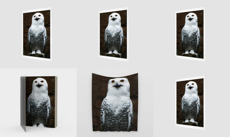 Snowy Owl preview