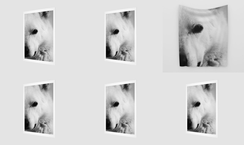 White German Shepherd preview