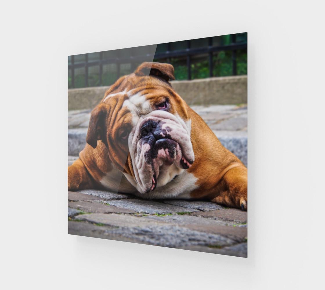 Aperçu de Chien grognon  /  Grumpy Dog #1