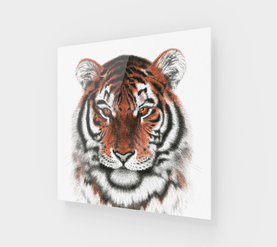 Bengal Tiger preview #1