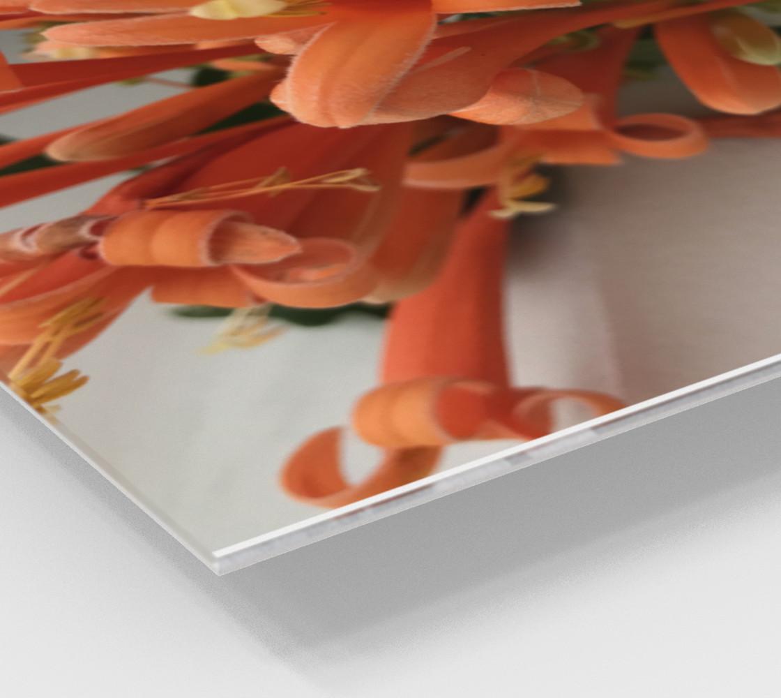 YMCA Orange Flower/Flor preview #2