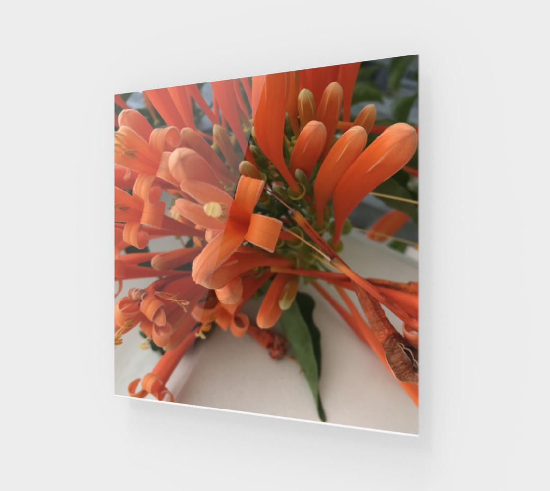 YMCA Orange Flower/Flor preview #1
