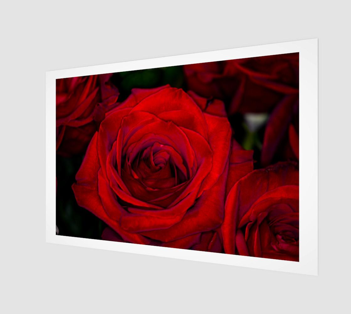 Aperçu de Red Roses #1