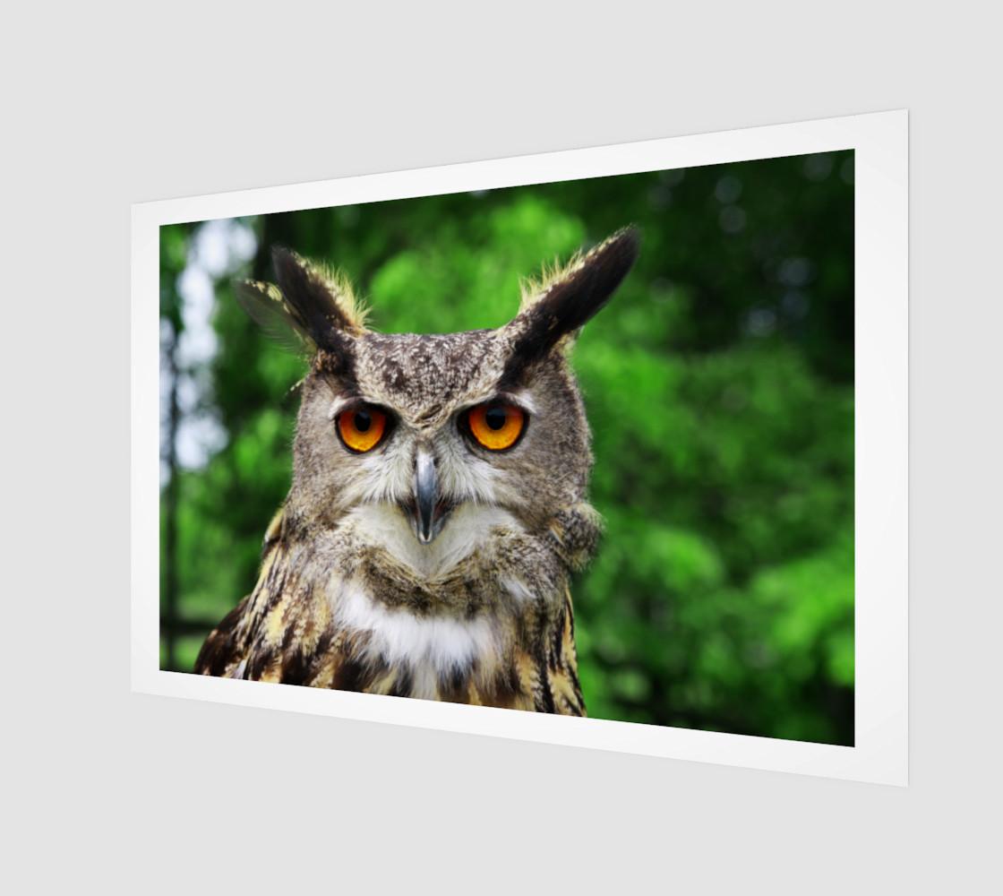 Aperçu de Owl #1