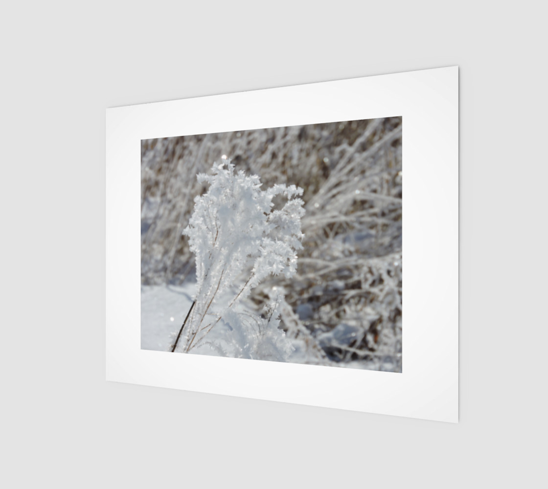 Frosted Feathered Plant preview #1