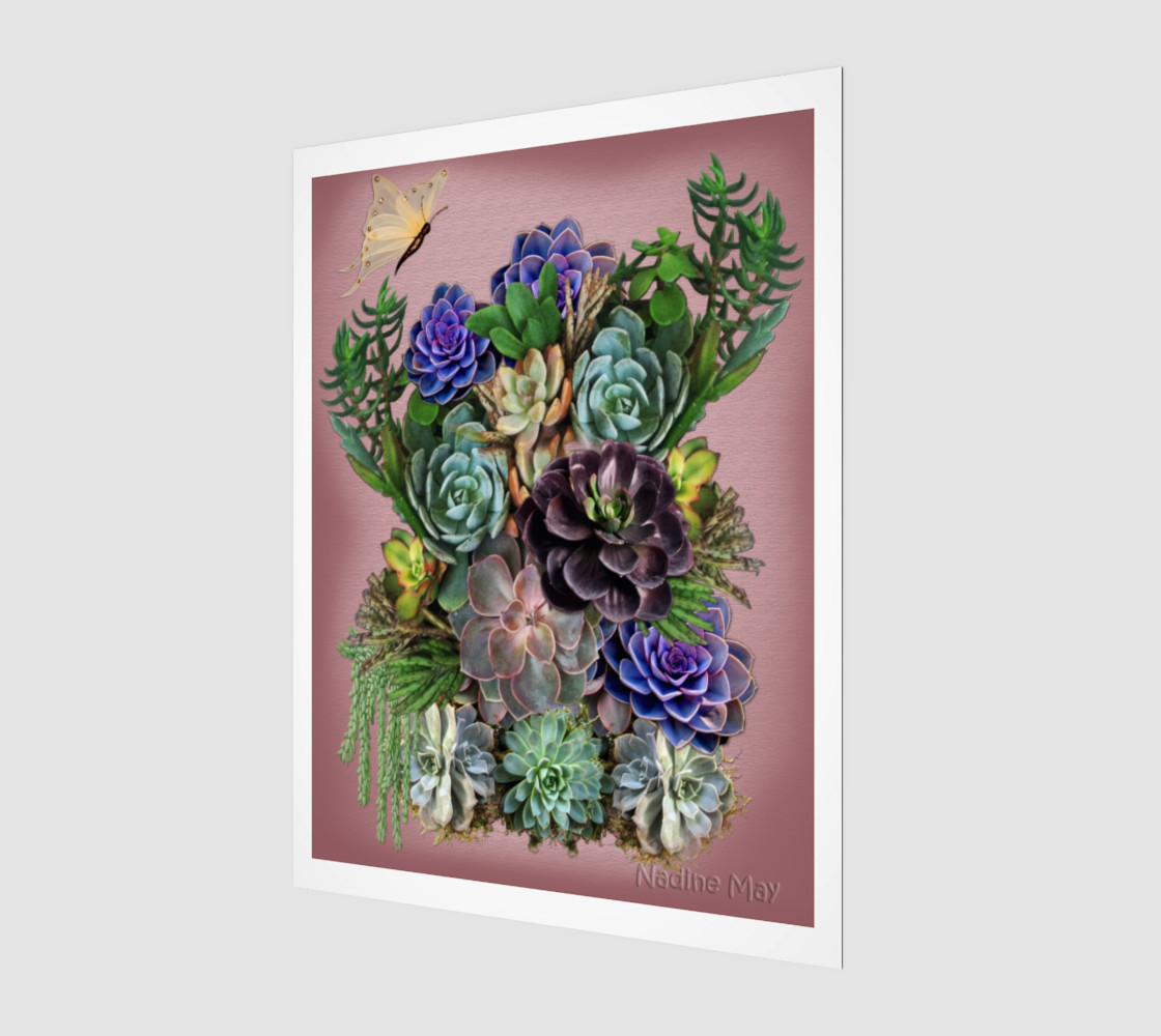 Succulents from my garden 3D preview