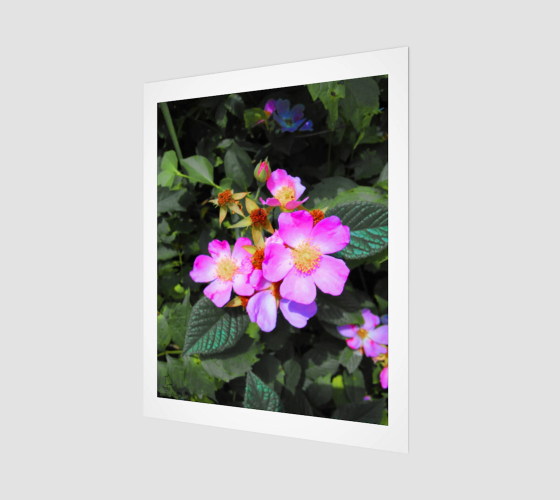 Wild Roses Photographic print by Tabz Jones preview #1