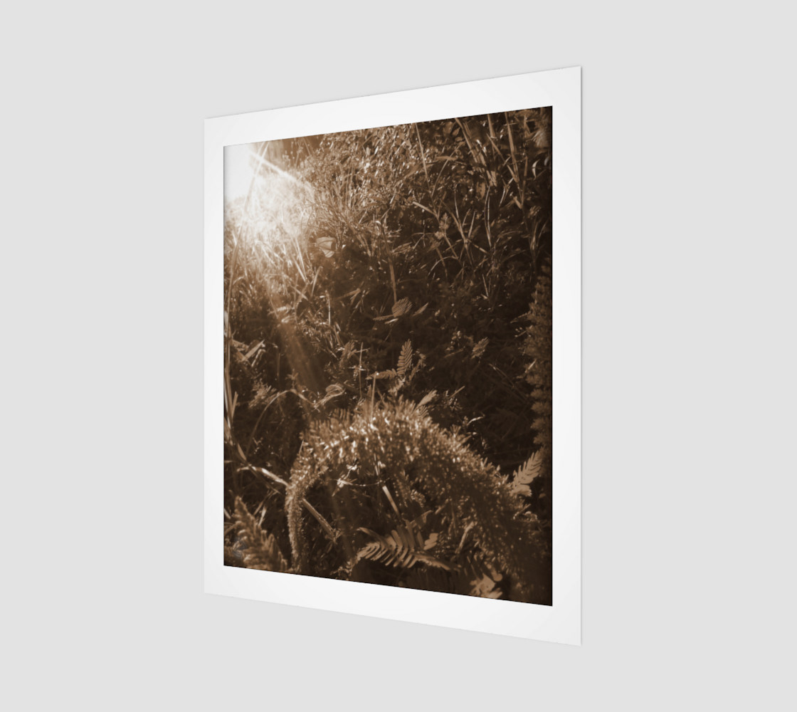Sepia Morning Number 5  Art Print by Tabz Jones preview #1