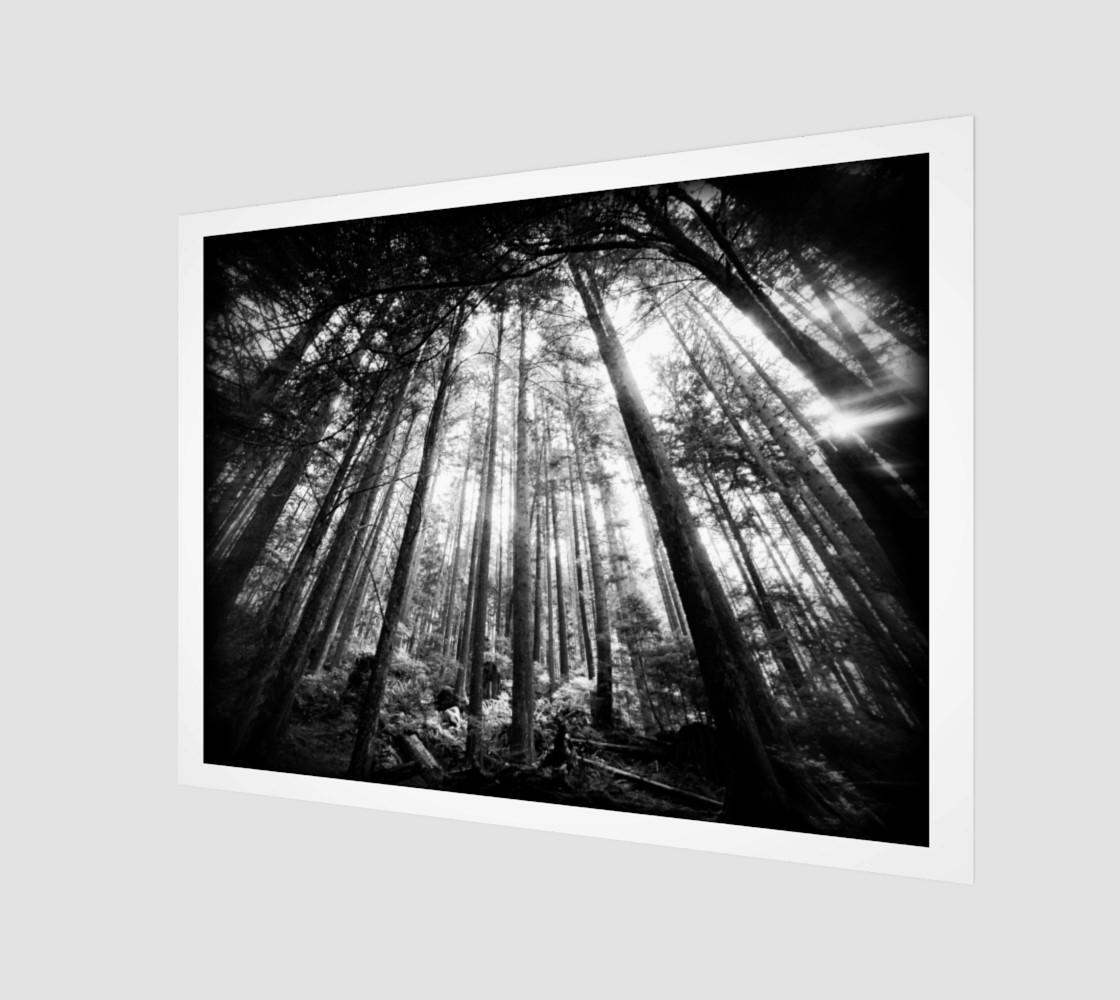 Aperçu de DSL100911-058 Holga infrared 7000px #1