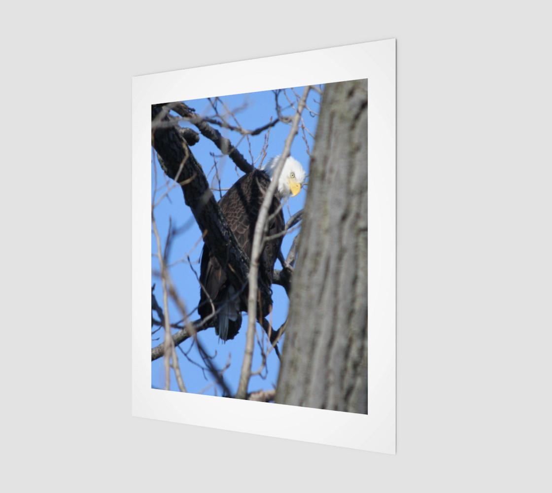 bald eagle preview #1