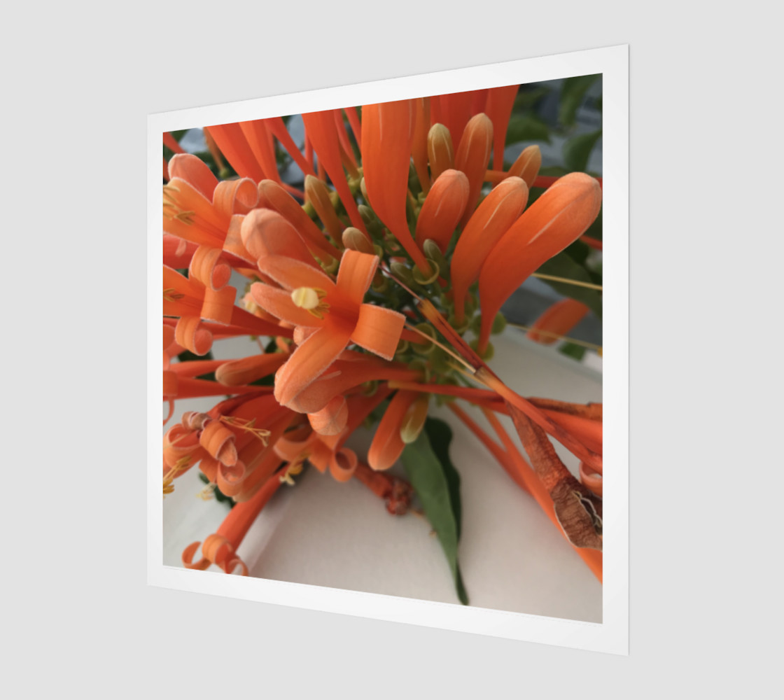 YMCA Orange Flower/Flor preview #1