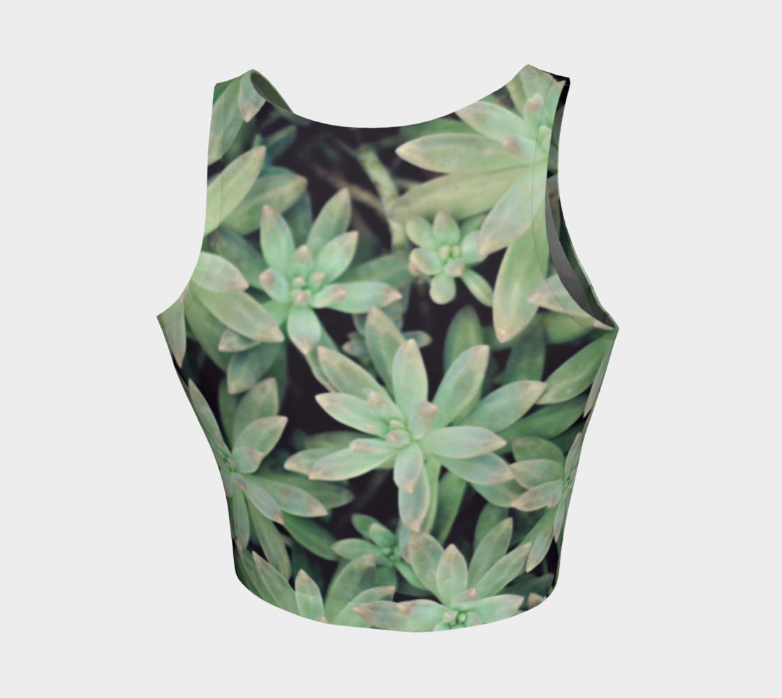 Aperçu de Succulent #2