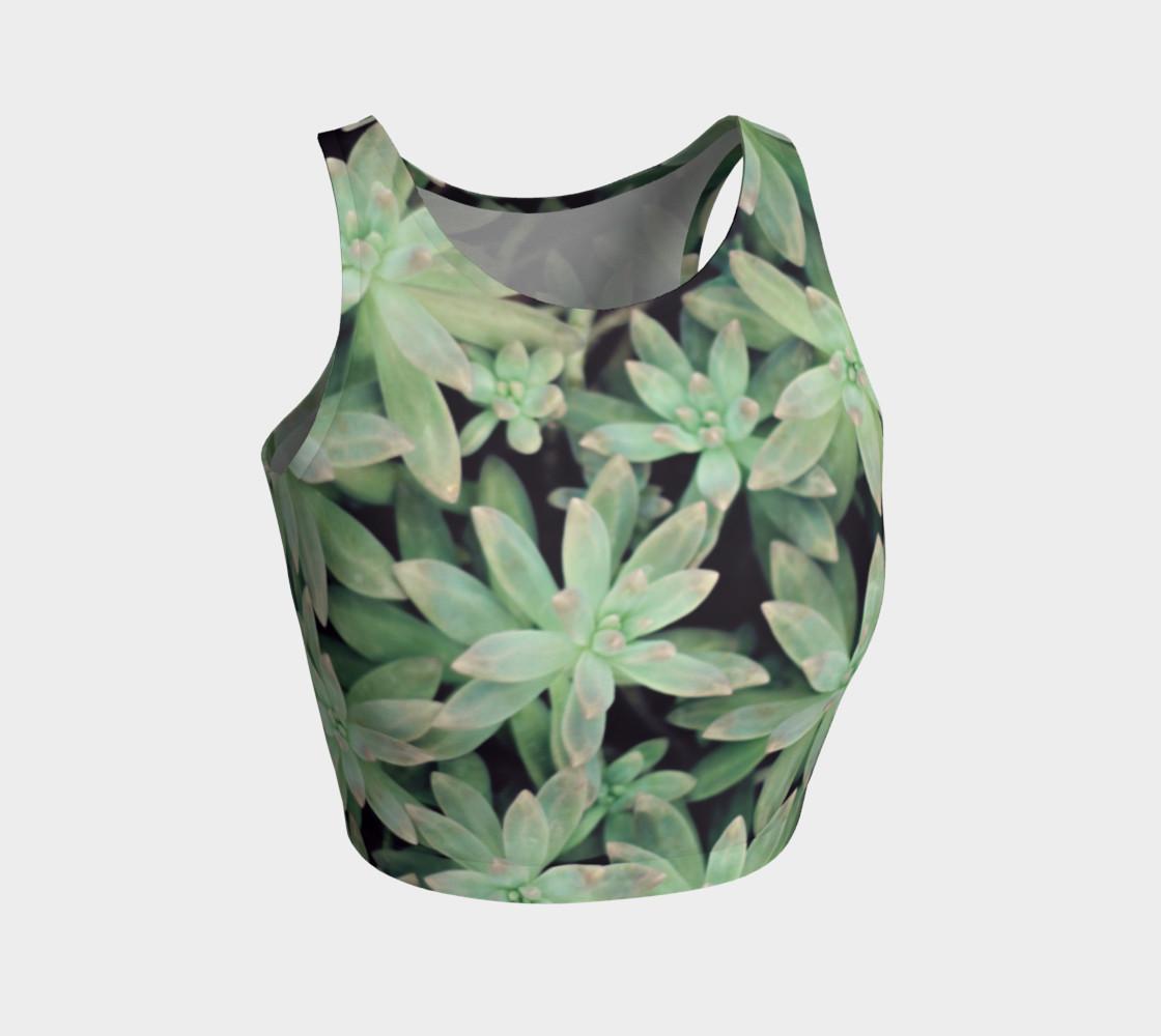 Aperçu de Succulent #1