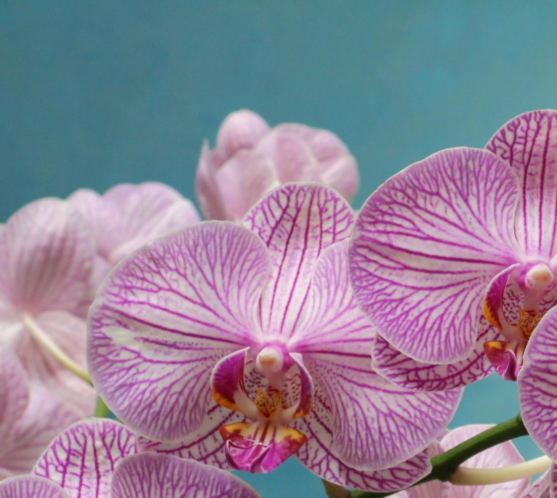 Purple Orchid Fabric thumbnail #1