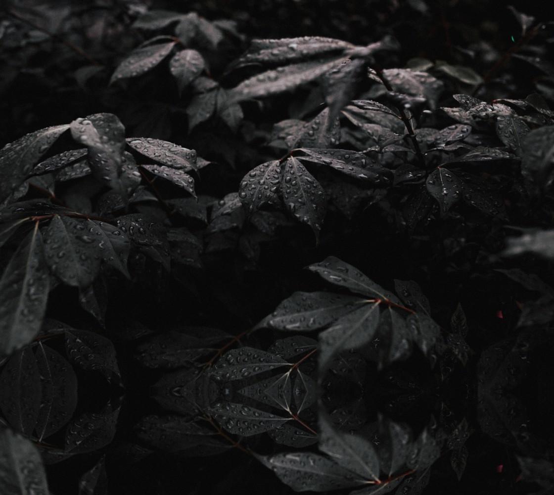 Black Leaf Miniature #1