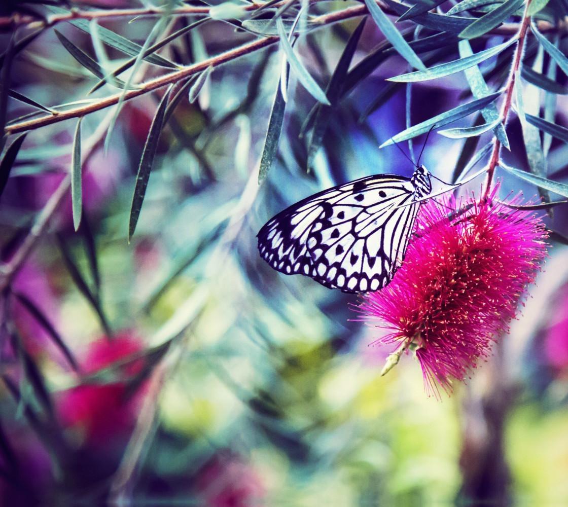 Butterfly Miniature #1
