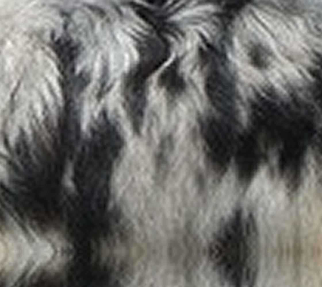 blue merle fur thumbnail #1