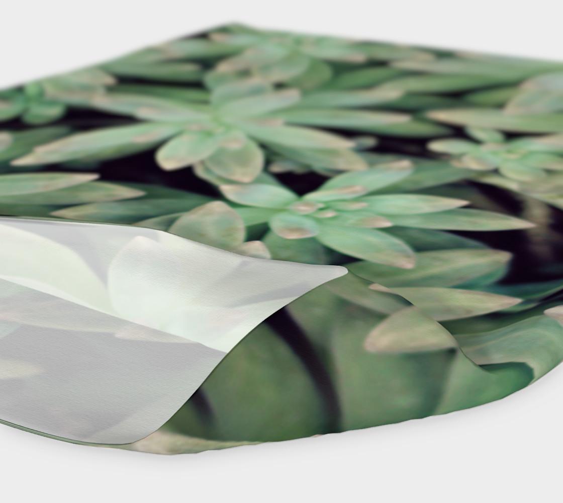 Aperçu de Succulent #4
