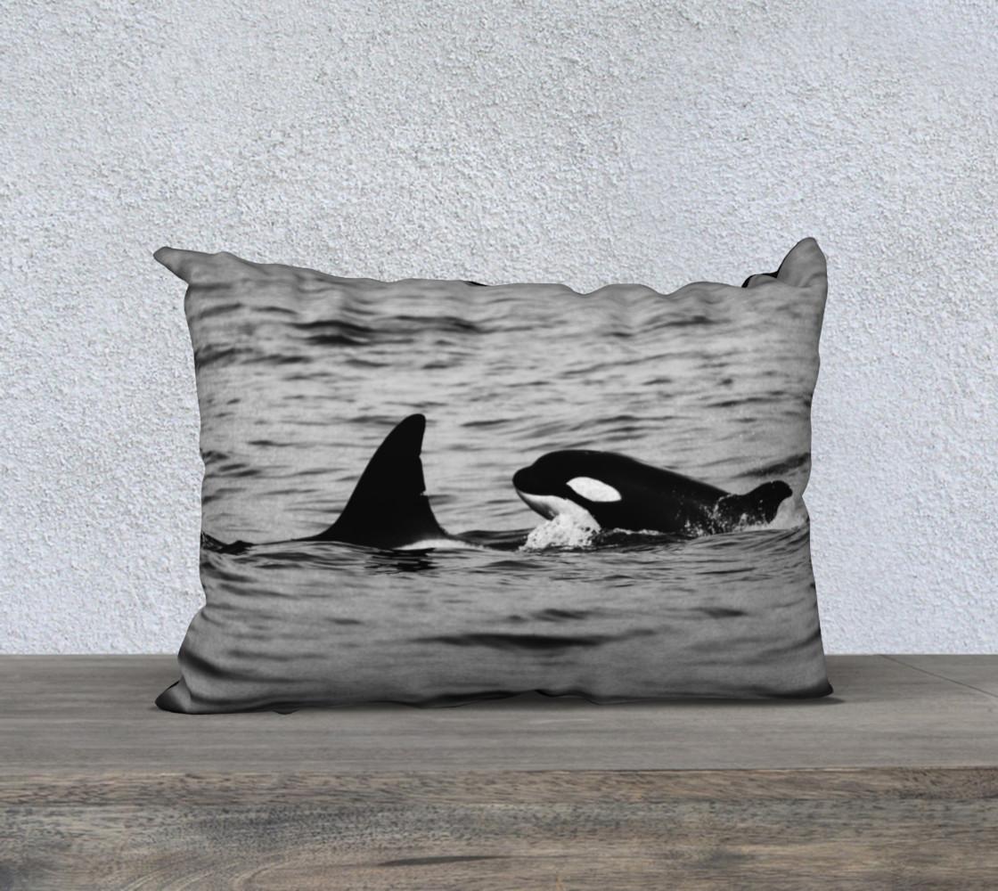 Aperçu de orcas #1