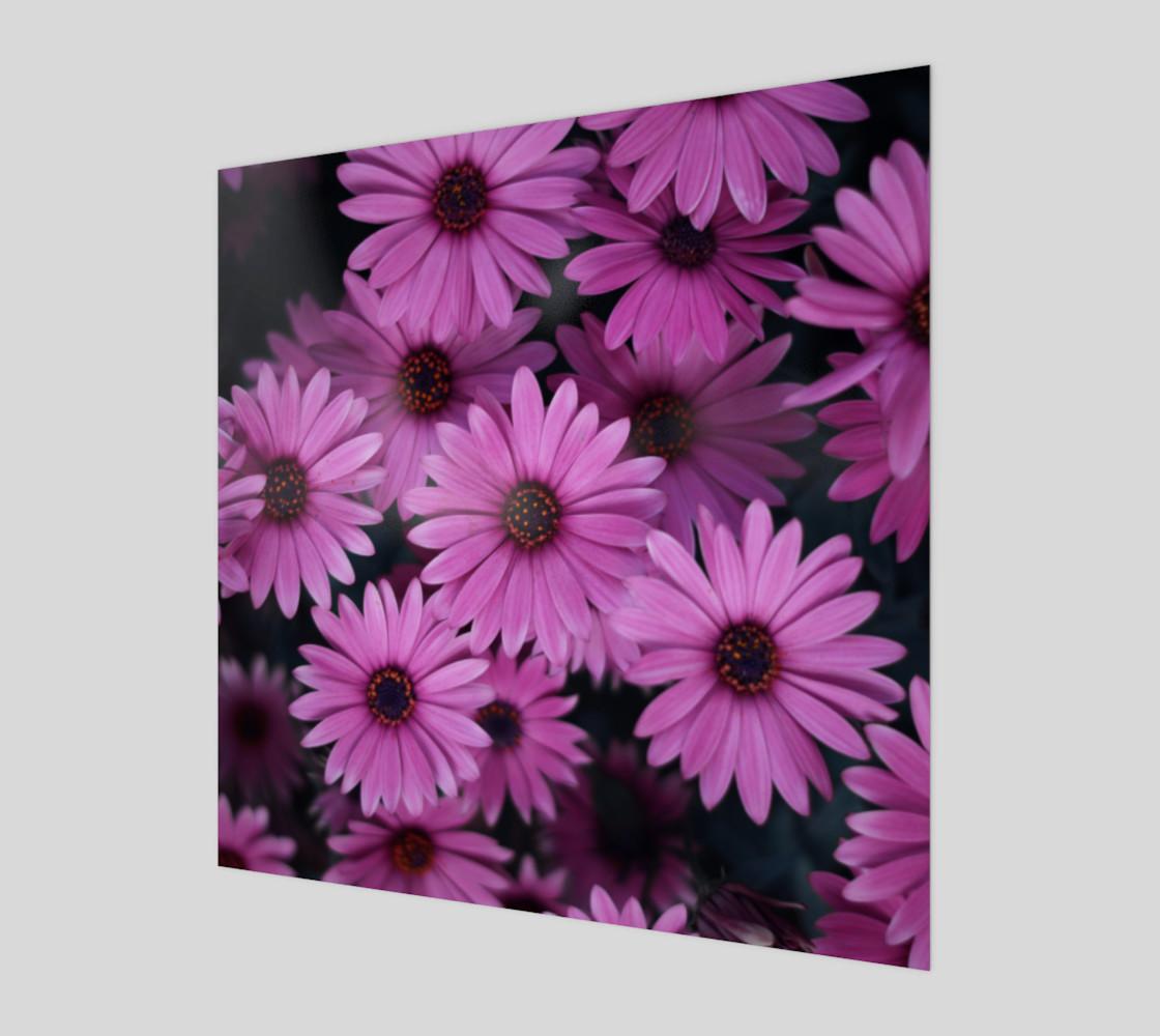 Pericallis Purple Flower Wall Art poster art print canvas wood print preview #1