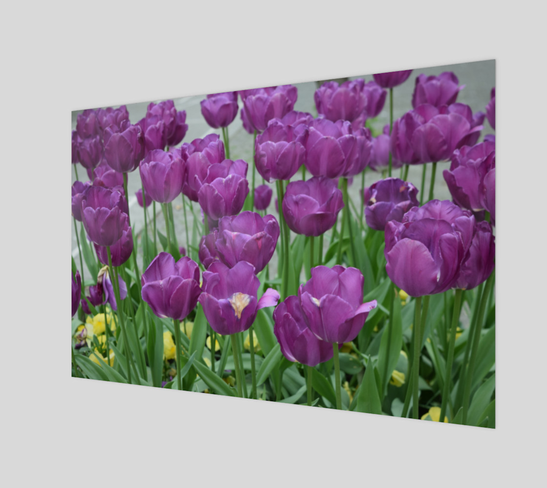 purple tulips forever preview #1