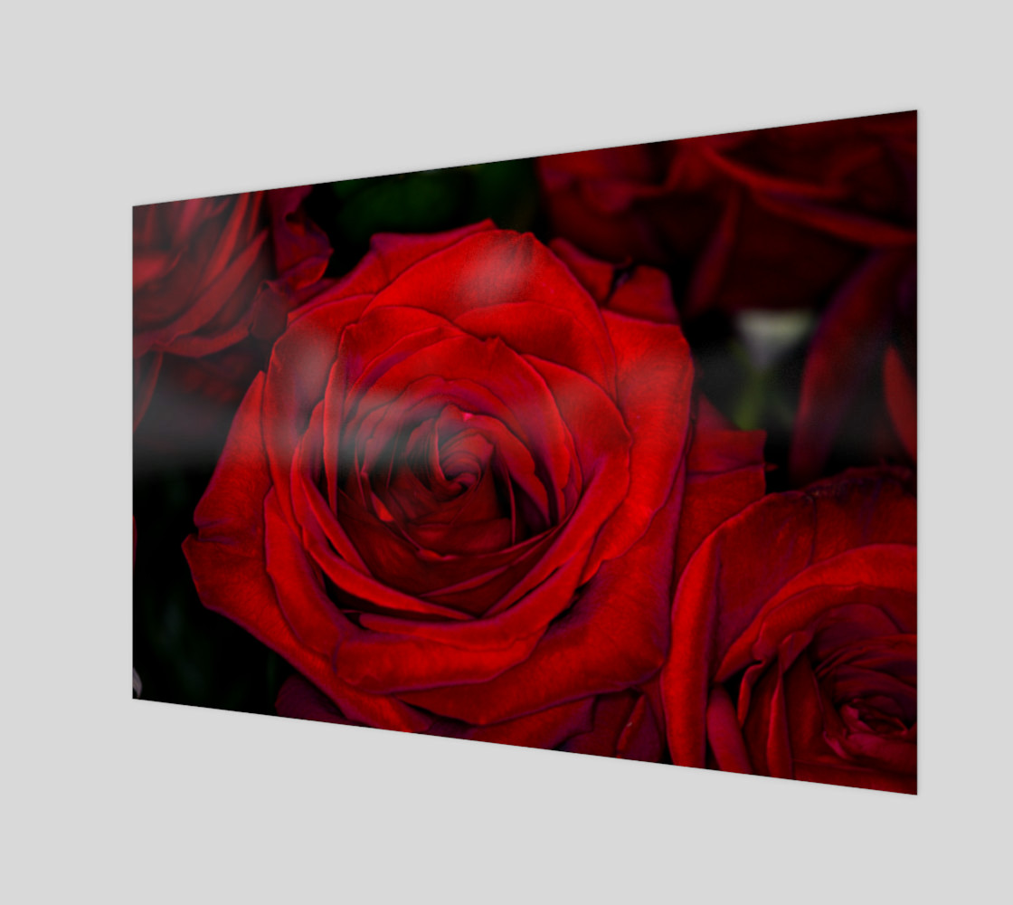 Red Roses preview #1