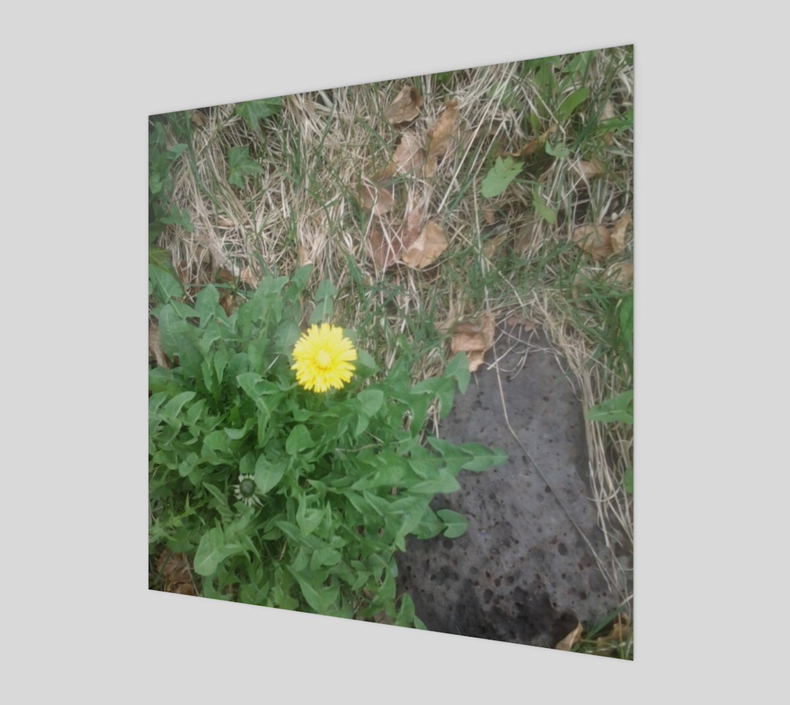 Dandelion and Rock Wall Art preview #1