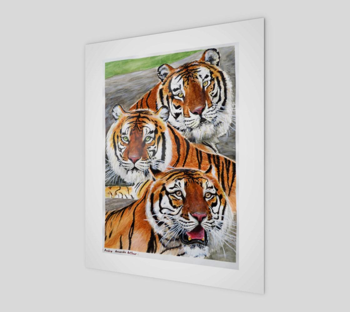 Aperçu de Texas Tigers Trio #1