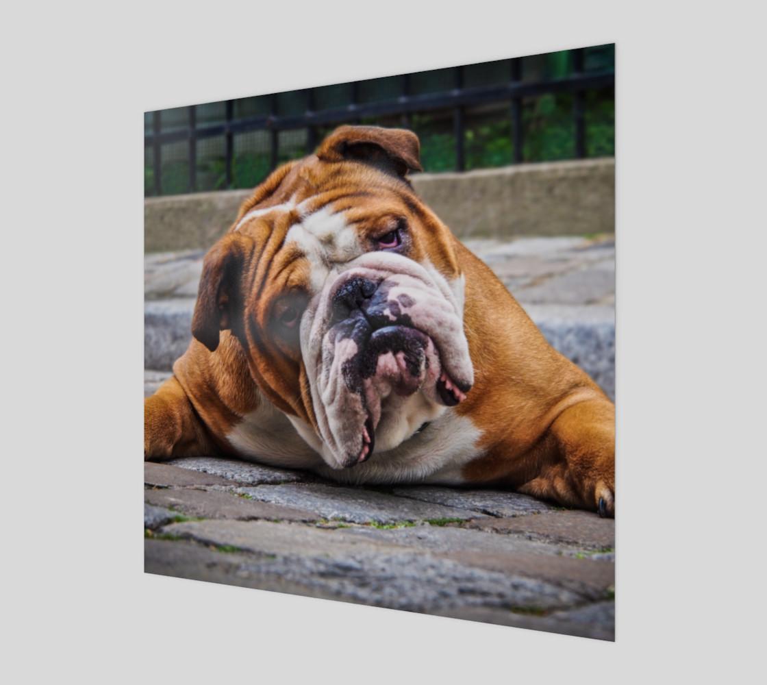 Aperçu de Chien grognon  |  Grumpy Dog #1