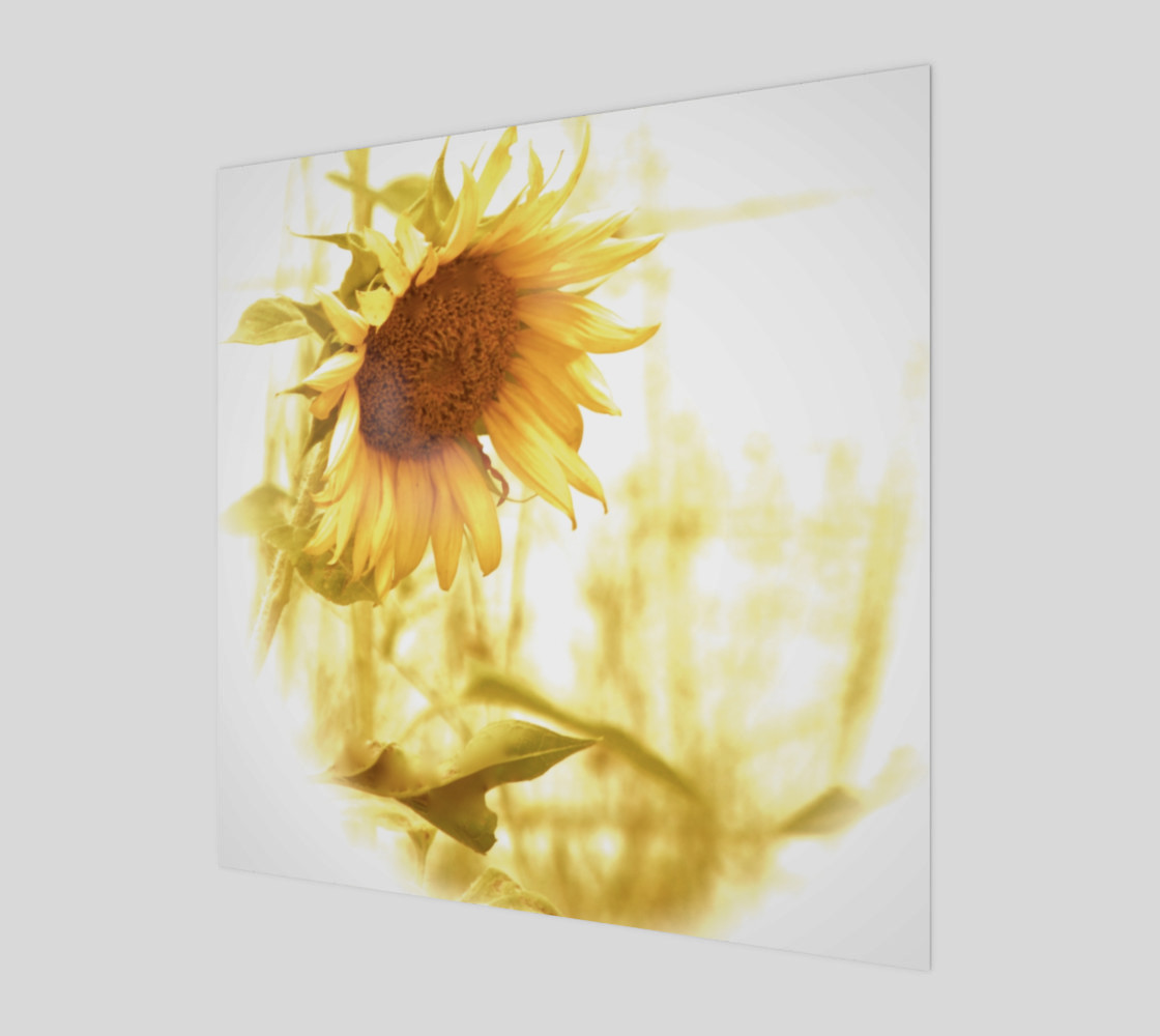 Sunflower in the Light preview #1
