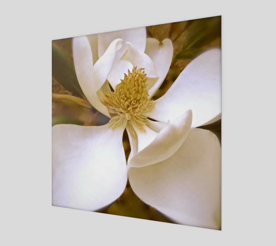 Aperçu de Angelic Magnolia #1