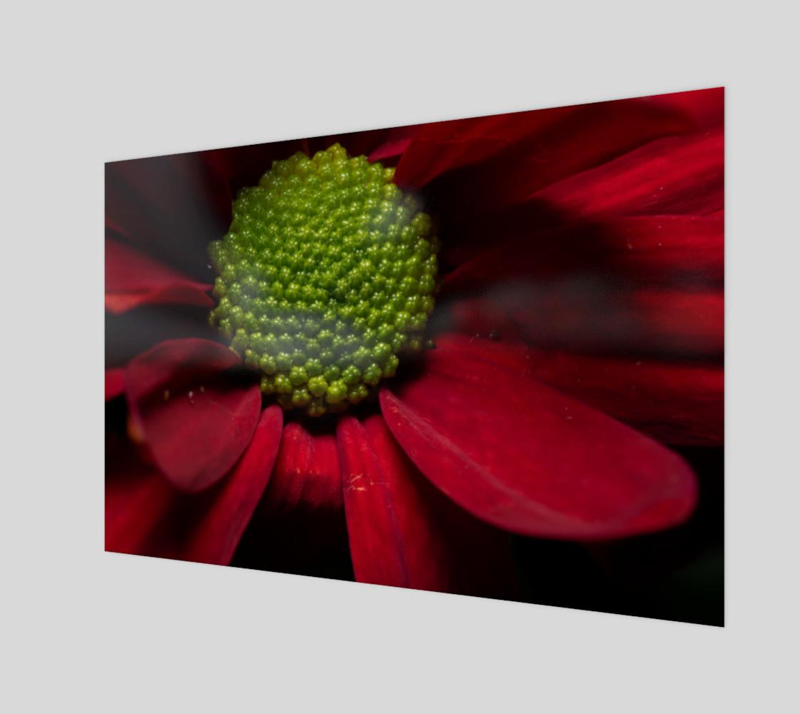 Red Chrysanthemum preview #1