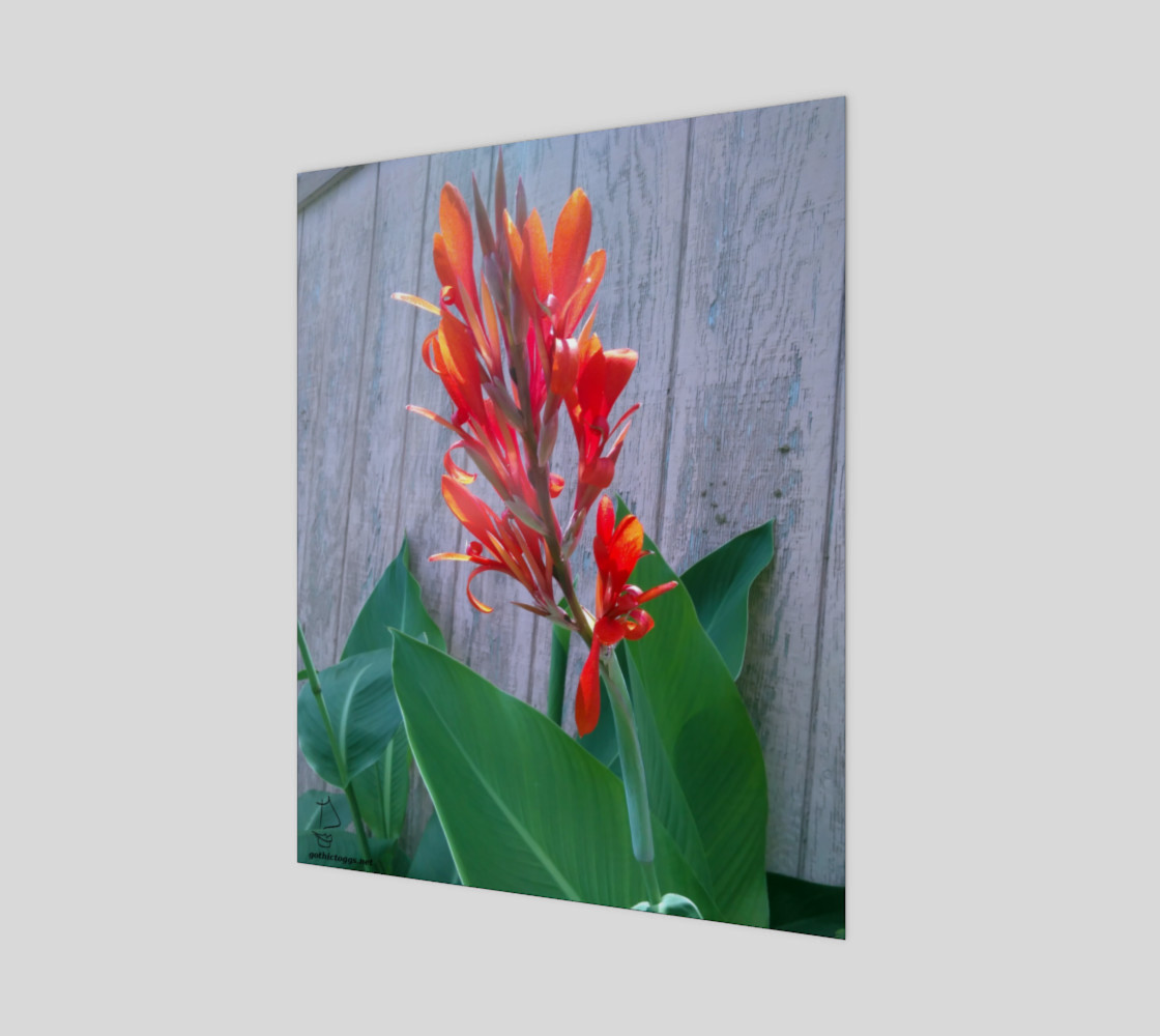 Canna Lily Photographic print by Tabz Jones preview #1