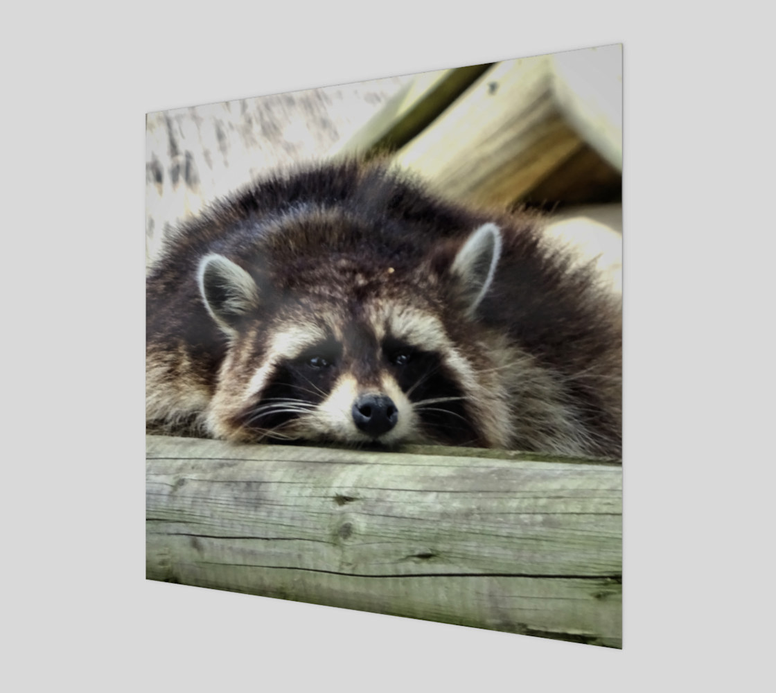 Tired Raccoon preview #1