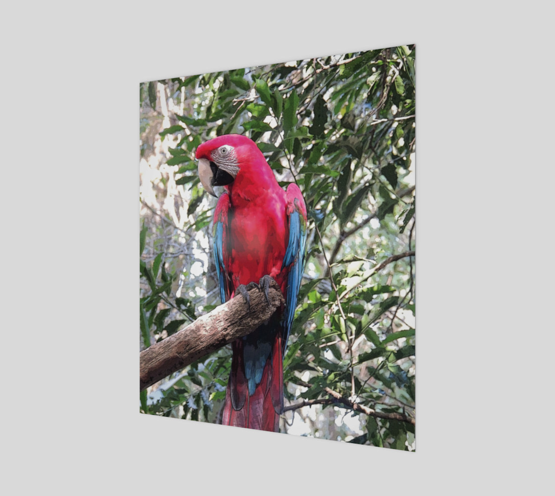 Scarlet Macaw preview #1