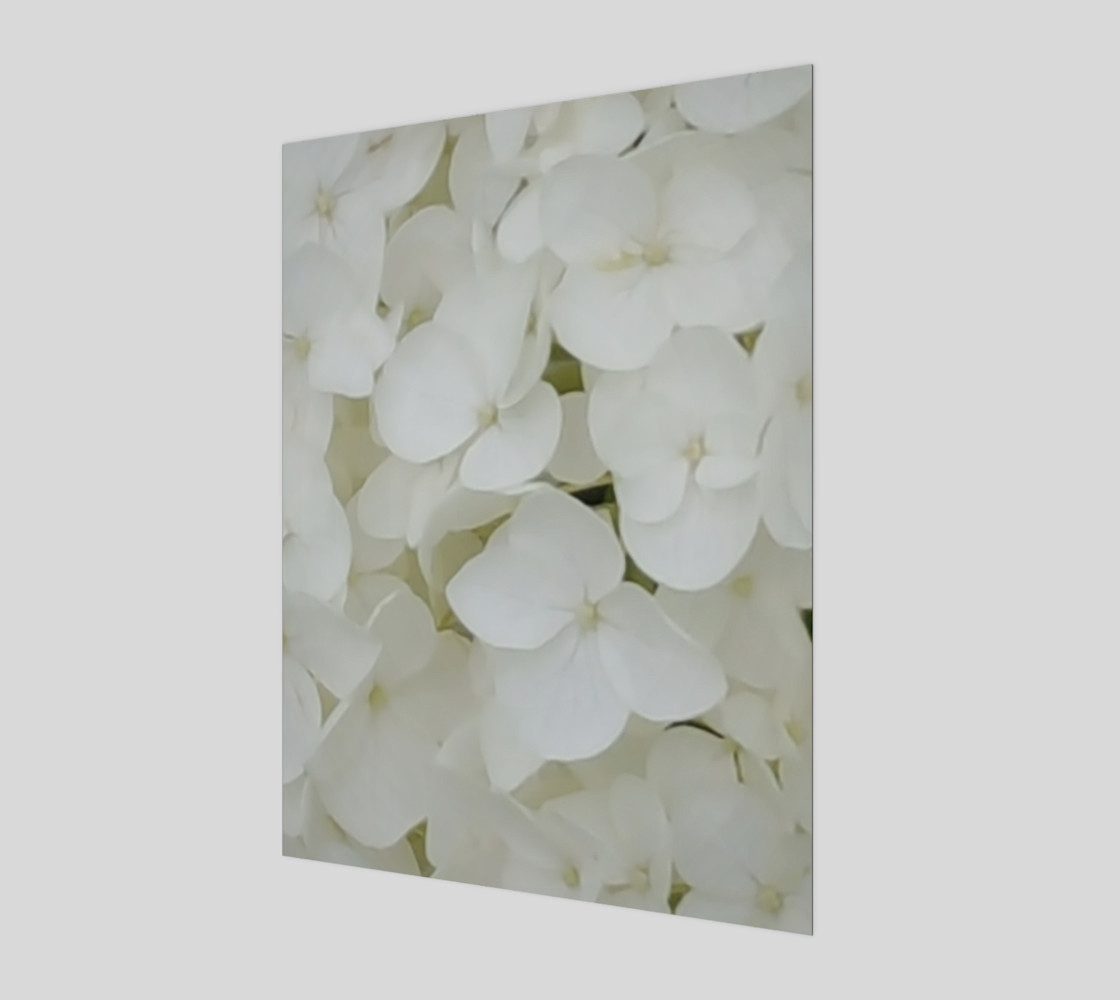 Hydrangea Flowers White Blossom Floral Photography preview #1