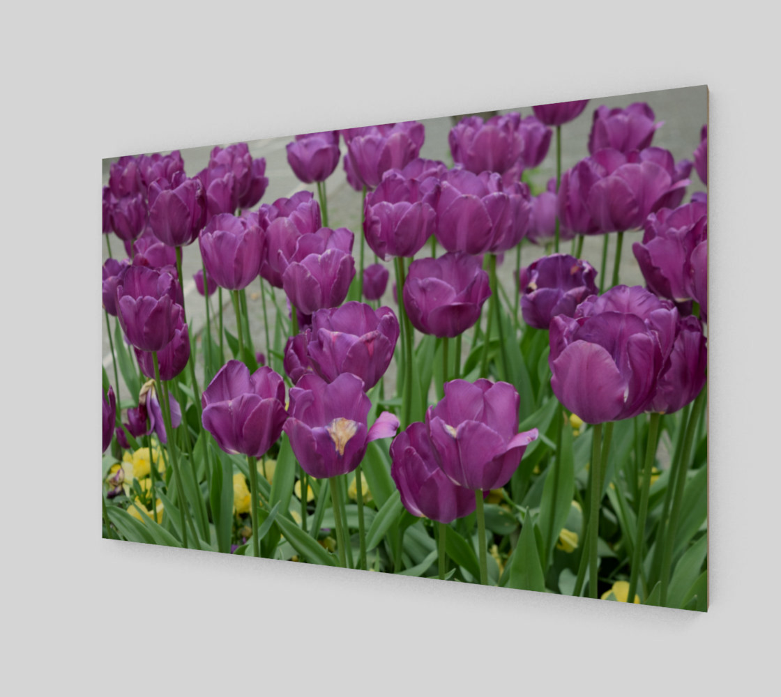 purple tulips forever preview #2