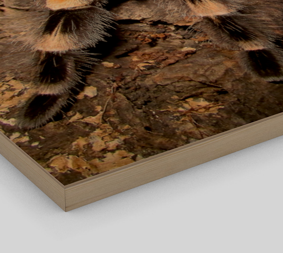 Mexican Red Knee Tarantula Spider Wall Art preview #3
