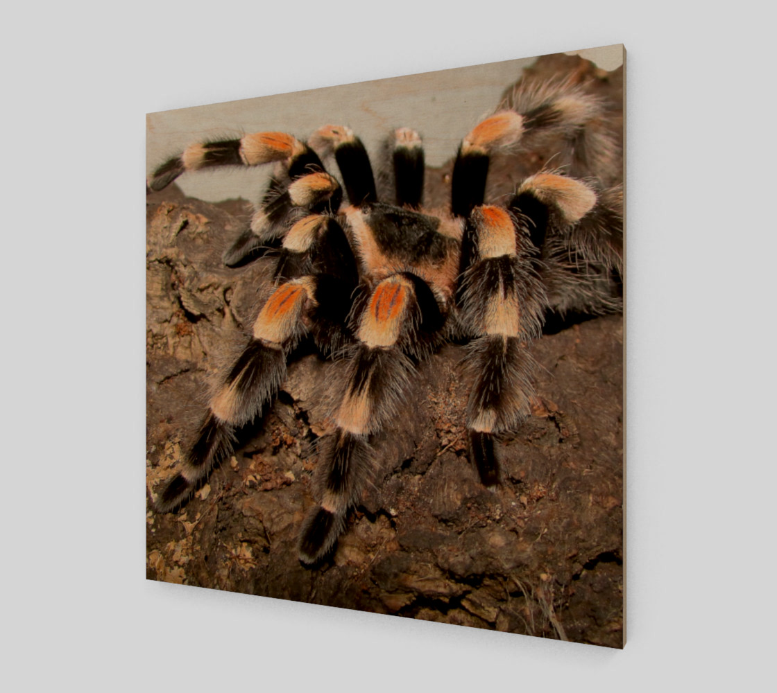 Mexican Red Knee Tarantula Spider Wall Art preview #1