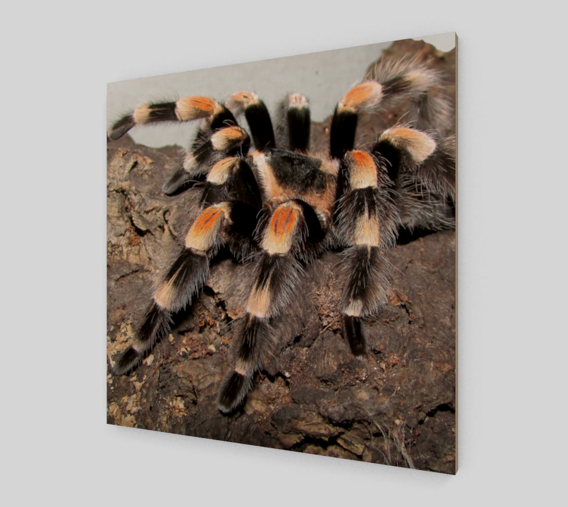 Mexican Red Knee Tarantula Spider Wall Art preview #2