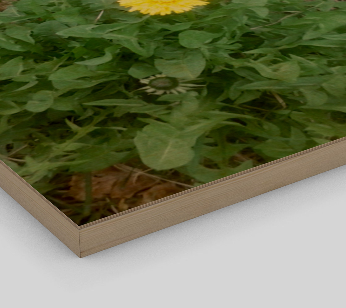 Dandelion and Rock Wall Art preview #3
