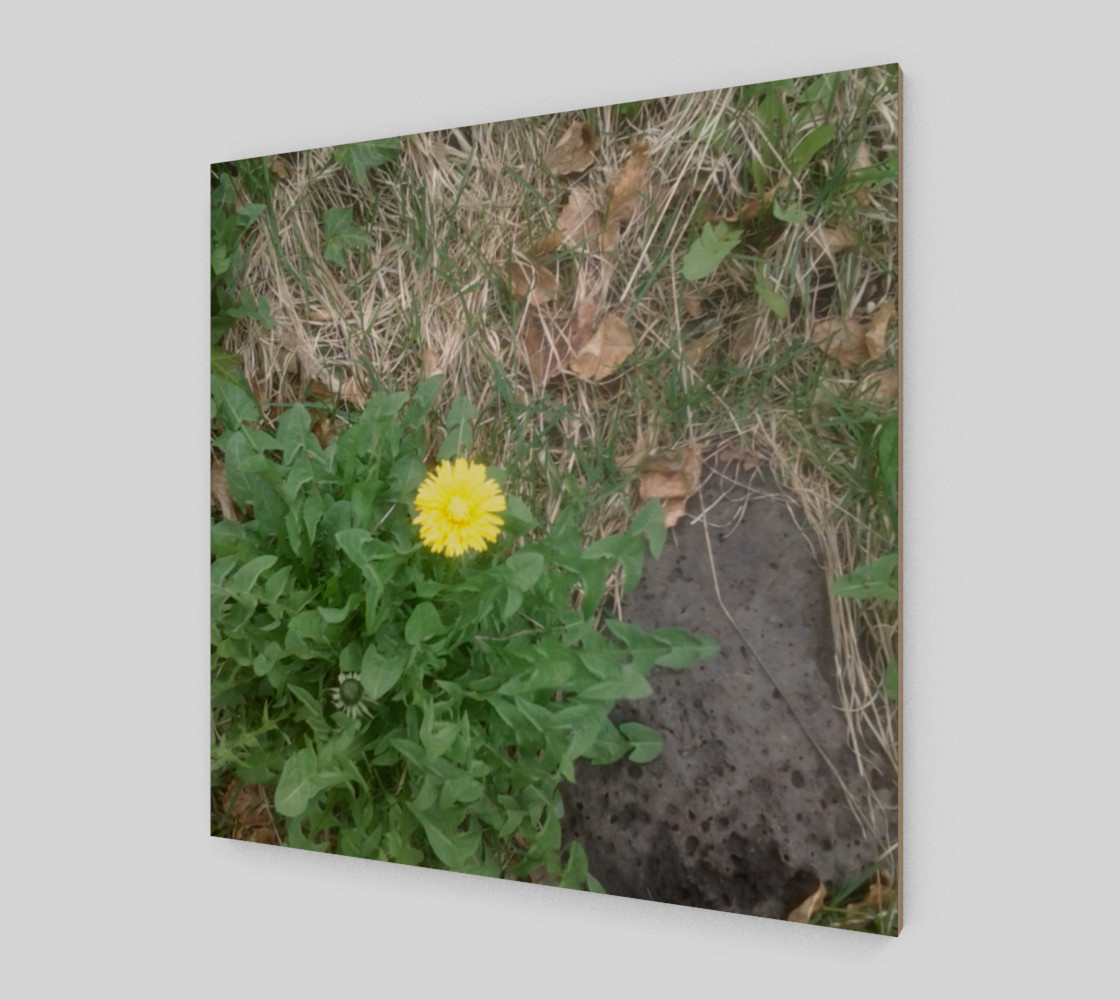Dandelion and Rock Wall Art preview #2