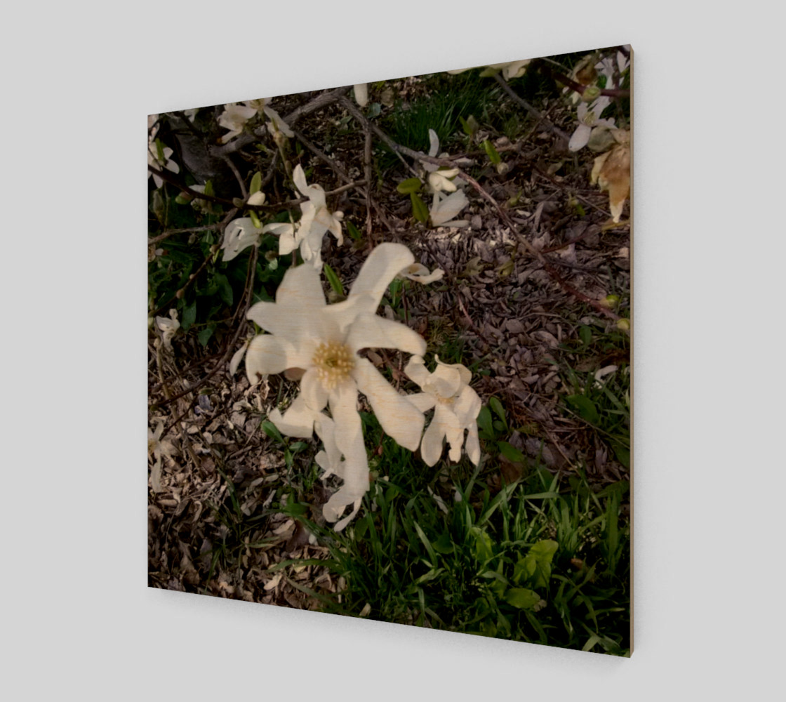 First White Flower of Spring Wall Art preview #1