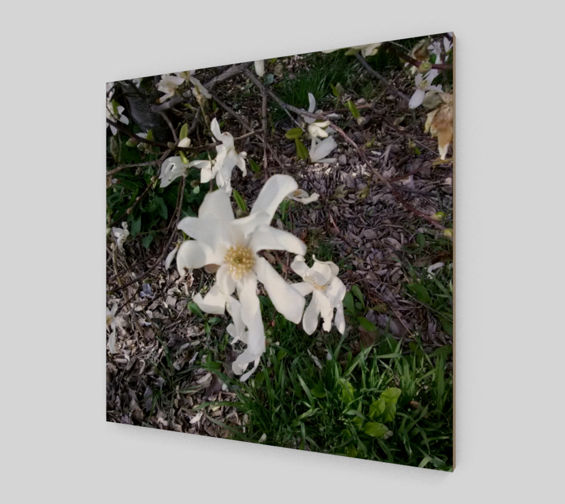 First White Flower of Spring Wall Art preview #2
